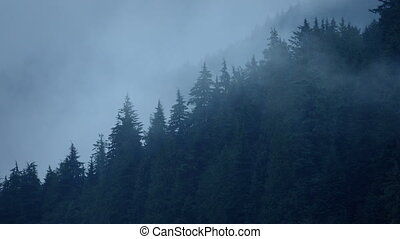 Wild Forest Slope With Mist - Wooded slope in the forest...