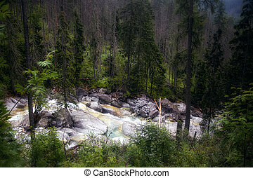 Wild forest stream running through the High Tatra mountains in Slovakia
