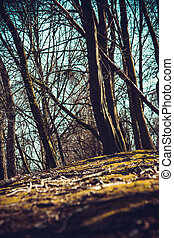 Wild forest