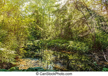 wild forest with creek - high dynamic range