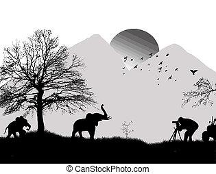 wild, fotograaf, schietende , olifanten