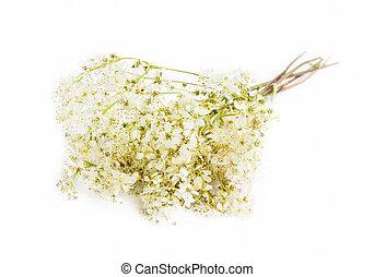 wild, galium, bloemen, vrijstaand, medicinaal