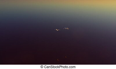 A pair of swans, wild geese, fly over a pink lake. Top view. Migratory birds fly away into the vortex.