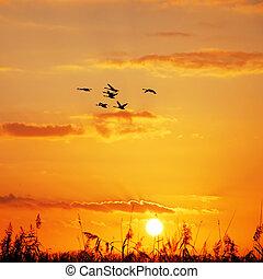 wild geese sunset
