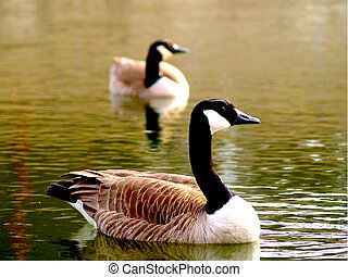 Two geese represent wildlife.