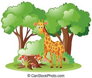 Wild giraffe in the forest