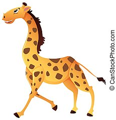 Wild giraffe running on white background