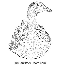 Wild goose. Hand-painted vector illustration.