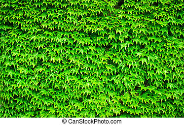Wild grape leaves background