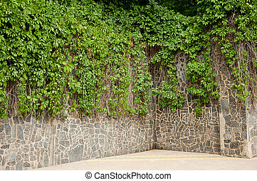 Wild grapes on a stone wall