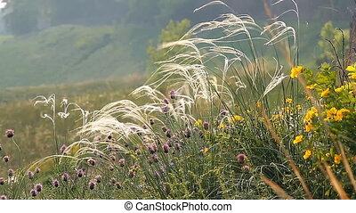 Wild Grass 1