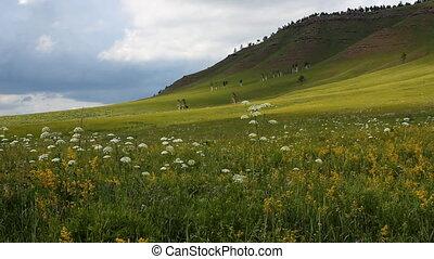 Wild Grass 11