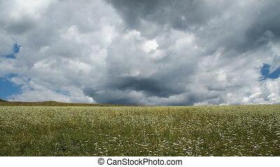 Wild Grass 7