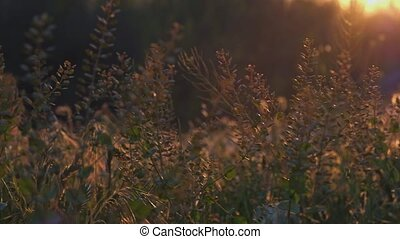 Wild grass area pan shot with showing sunset sun in the end of movement 4k UHD
