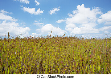 Wild grass blowing in the wind