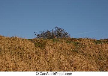 Wild grass blue sky