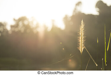 Wild grass by the lake. Golden glow. Copy space.