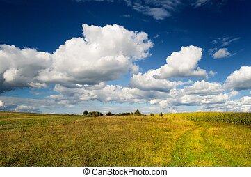 Wild Grass Field in Autumn