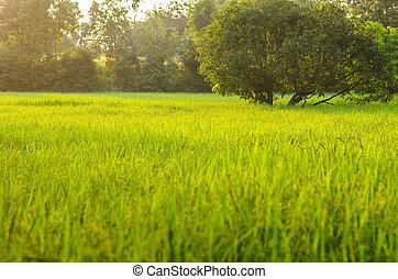 wild grass in bright sunset