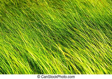 Wild grass in forest