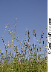 wild grass leaves on blue sky background
