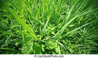 Wild grass lit by sun light, closeup view in motion from...