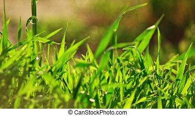 Wild grass macro backlit panoramic shot in slow motion