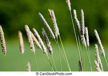 Wild Grass Macro