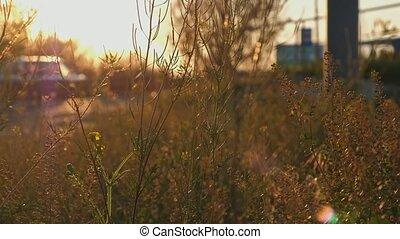 Wild grass shuttering on wind macro shot 4K