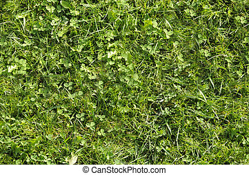 Wild grass texture that perfectly loop horizontally and vertically