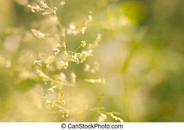 Wild green plants in a meadow