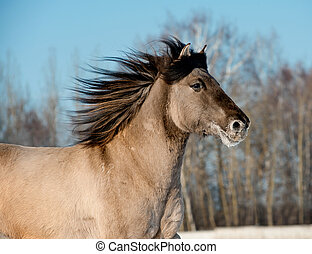 wild, grijs, paarde