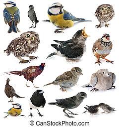 wild, groep, vogel