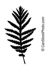 Wild herb silhouette.