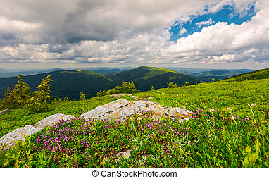 wild herbs among the rocks in summer mountains. wonderful...