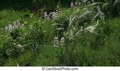 Wild herbs moving with the wind in full HD