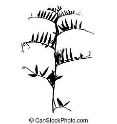 Wild herbs silhouette.