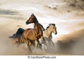 wild herd in stormy day - Beautiful horses of different...