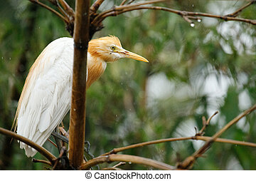 Wild herons are sitting on a tree in the forest. Bali, ...