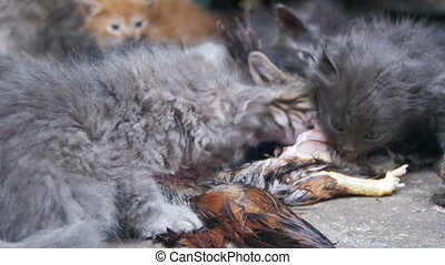 Homeless Hungry Kittens Eats a Caught Bird on the Street