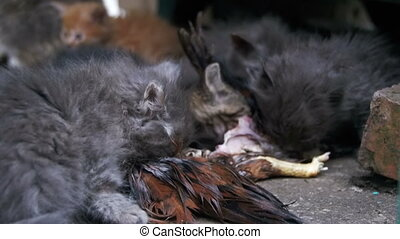 Homeless Hungry Kittens Eats a Caught Bird on the Street. Slow Motion