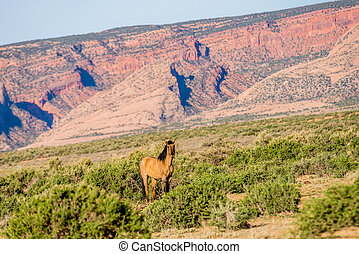 wild horse eating grass at Monument Valley, Arizona