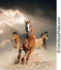 wild horse in dust - wild horses running wild in dust under ...