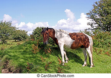 Wild horse in natural environment