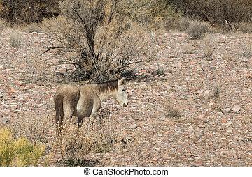 Wild Horse in the Desert