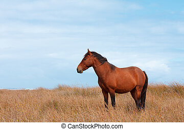 Wild horse in the field