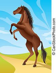 Wild horse in the fields