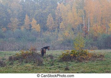 Wild horse in the fog