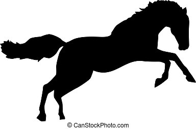 Wild horse jumping bronco