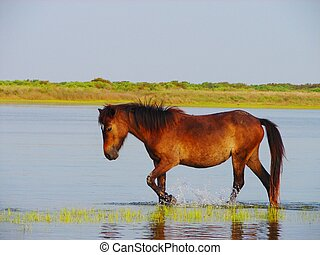 this is a wild horse off the shore line of Shackleford island near Beaufort, NC